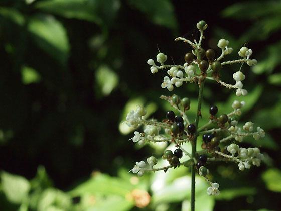 背景をぼかした植物