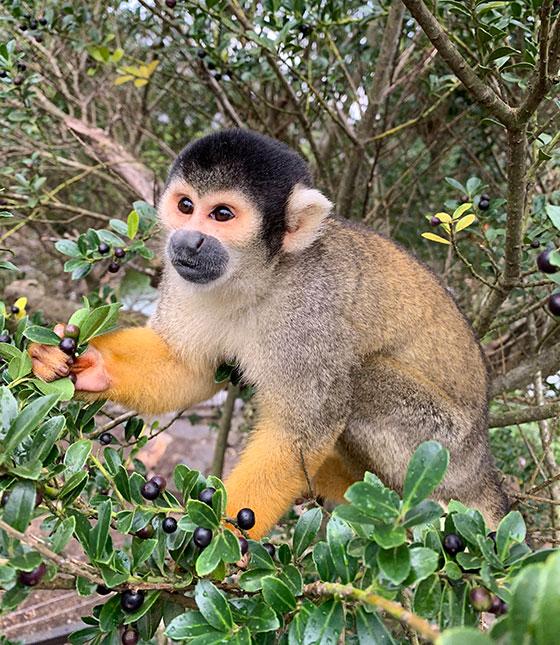 お猿のベストショット