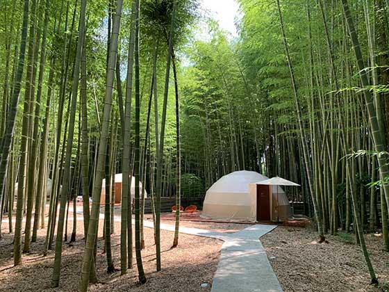 竹やぶの中のテントを遠くから
