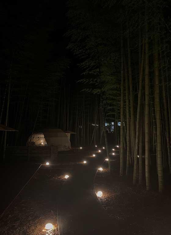 夜の竹やぶ