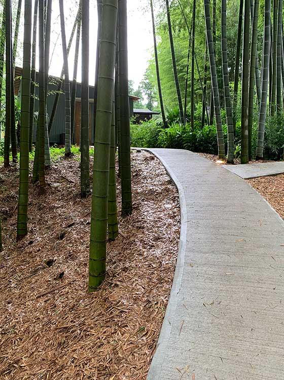 竹やぶの小道